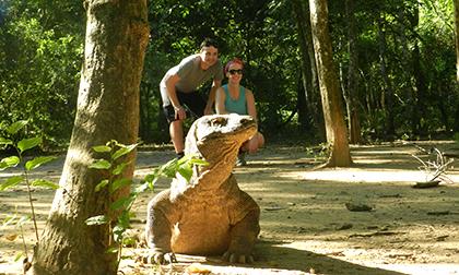 komodo dragon,adventure,boat tour,rinca island,labuan bajo,mirror stone cave