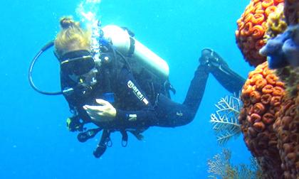 komodo dragon,diving trip,boat tour,dive master komodo,trekking,bali komodo