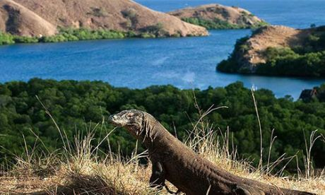 komodo tour from bali,bali komodo tour,komodo island one day tour from bali
