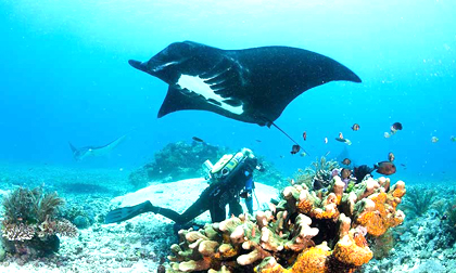 komodo tour,diving trip,world class diving,Komodo dragon, rinca island,manta point diving, boat